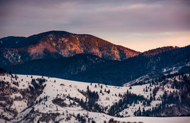 snowy mountain hills with forest at gorgeous reddish sunrise. beautiful nature scenery in winter
