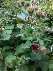 Colorful butterfly on shrubs