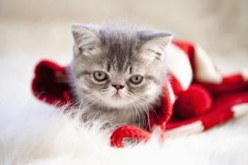 kitten Playing