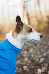 Side profile of a dog in a onesie outdoors