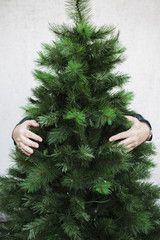 Man hugging Christmas tree