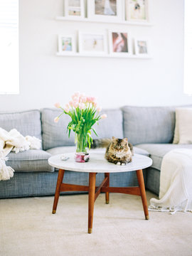 Cat and a coffee table in living room
