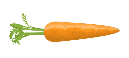 Isolated orange carrot.