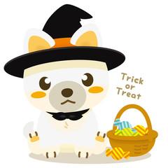 いぬっこ倶楽部 ハロウィン 柴犬(白)