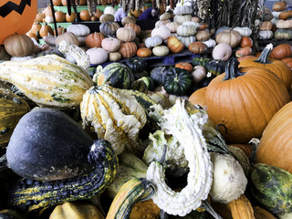 Halloween and Thanksgiving Pumpkins Autumn season, many bright orange at the Farmers Market.