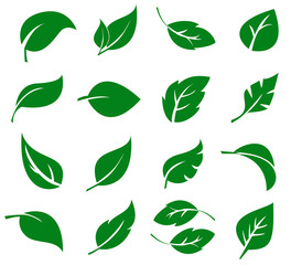 Green Leaves Collection. Vector Illustration.