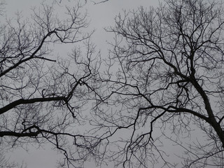 black and white naked tree branches in winter