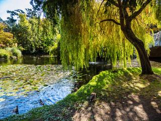 Lake in the public Beacon Hill Park, Victoria BC Canada