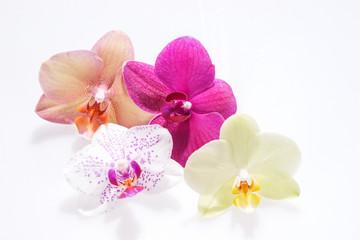 Verschiedene Orchideenblüten