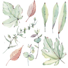 watercolor leaves collection.