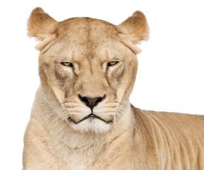 Fototapete - Her majesty lioness
