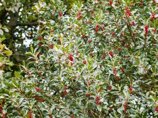 growing fresh berries on green tree leaves background