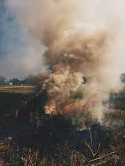 hay smoke