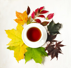Cup of tea and autumn colorful leaves