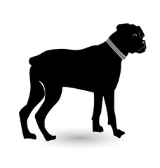Rottweiler pet dog, icon vector
