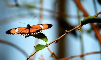Orange Butterfly on Branches