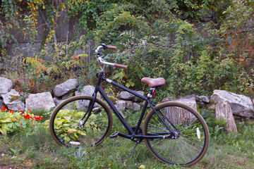A bicycle with upright handlebars and a leather seat parked in a garden with nasturtiums, hostas and raspberry bushes.