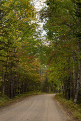 Road through a forest with the changing leaves of early fall. Many leaves are still green while some are gold and rust. Photographed in natural light.