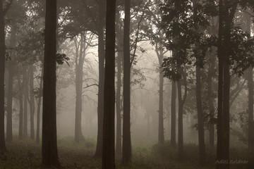 Misty morning at Nagarhole national park