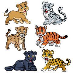 collection of babies big cats