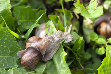snail, close up