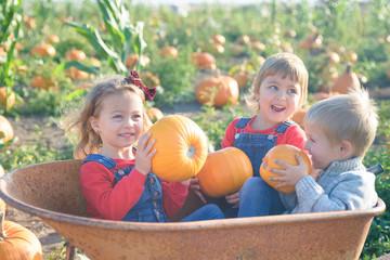 Happy kids laughing inside wheelbarrow at field pumpkin patch