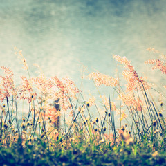Grasses Flowers on River Bank