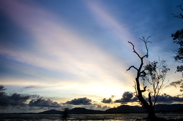 mangrove forest in sunset with back ground big buddha hill Phuket