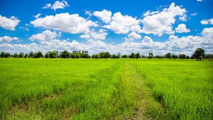 Green meadows in Thailand
