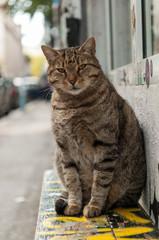 big cat lying on a bench