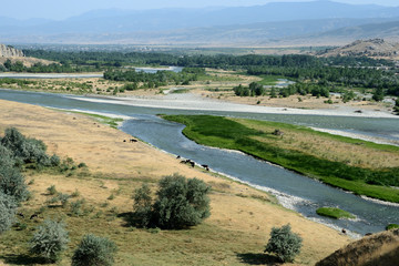 Georgian landscape with a river and cows