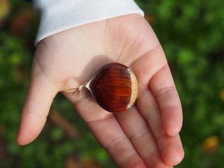 Maronen, Esskastanie auf Kinderhand