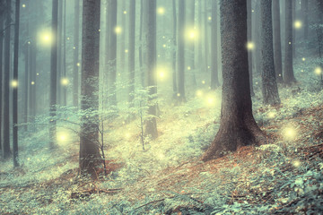 Papiers peints Forets Lovely magic colored blurred foggy forest trees with illustrated abstract bokeh light.