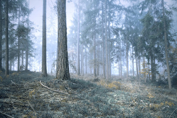 Wall Mural - Scary blue saturated vintage foggy forest tree landscape. Color filter effect used.