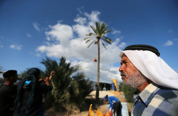 A man looks on as Palestinians harvest dates from a palm tree in Deir al-Balah, in the central Gaza Strip