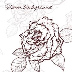 Rose hand drawn illustration