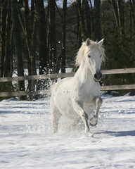Photo sur Aluminium Snowgirl