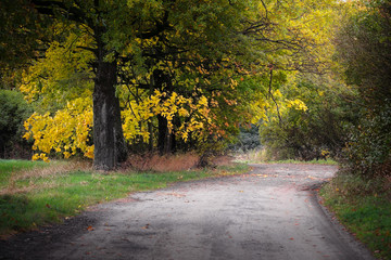 country road in the autumn among the bright trees.