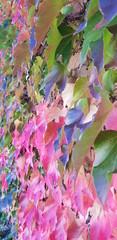 Couleur automne nature lierre rose violet vert feuilles gaité changement verdure