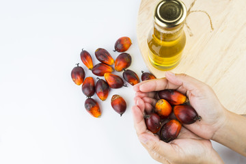Commercial palm oil cultivation. Since palm oil contains more saturated fats. Oil from Elaeis guineensis is also used as biofuel. It is used as a cooking and in packed food products