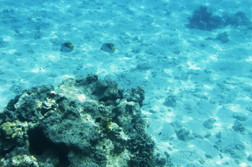 Underwater landscape with corals and passing fish