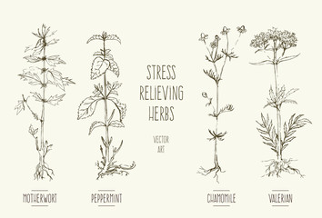 Vector illustrations of stress relief herbs.