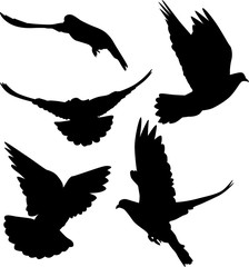 pigeon black isolated five silhouettes