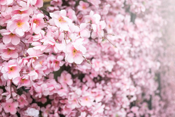 Close up artificial sakura flower for decorating japanese style , image has shallow depth of field