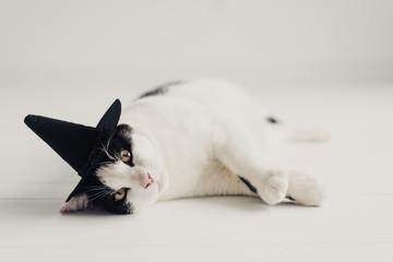 kitty witch