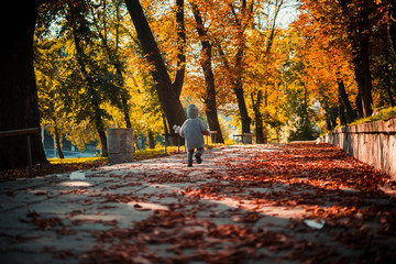 a little boy in a gray knitted sweater with a gray teddy bear walking along the autumn park