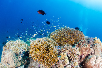 A healthy tropical coral reef