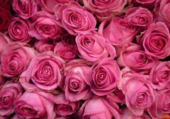 Pink roses bunched tightly together