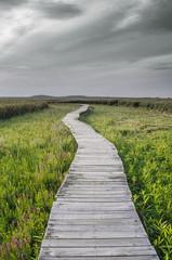 Boardwalk in Marsh