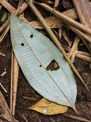 Vegetal leaf looking like a happy face - pareidolia